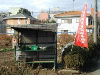 niwasaki_2.JPG