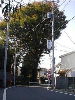 tachiki_3.JPG